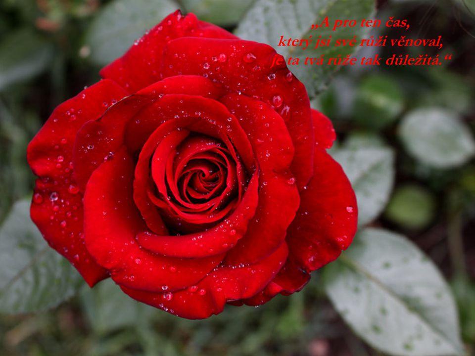 který jsi své růži věnoval, je ta tvá růže tak důležitá.