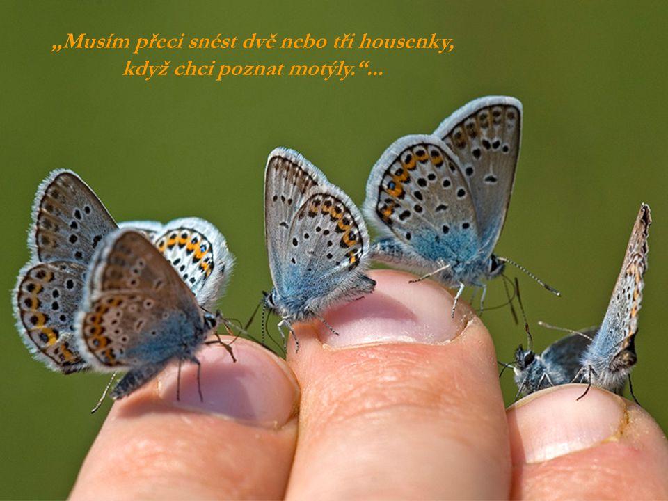 """""""Musím přeci snést dvě nebo tři housenky, když chci poznat motýly. ..."""