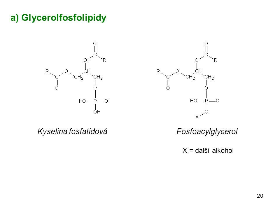 Kyselina fosfatidová Fosfoacylglycerol