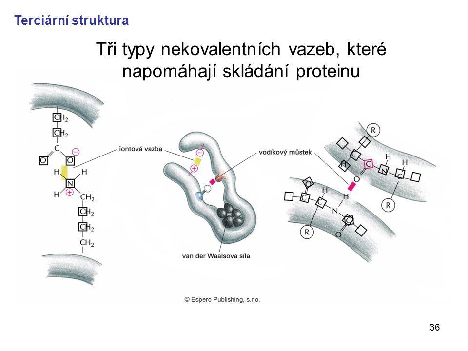 Tři typy nekovalentních vazeb, které napomáhají skládání proteinu