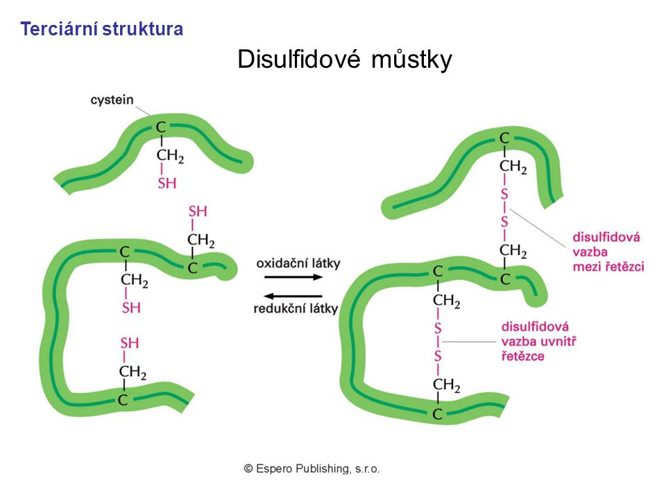 Terciární struktura Disulfidové můstky