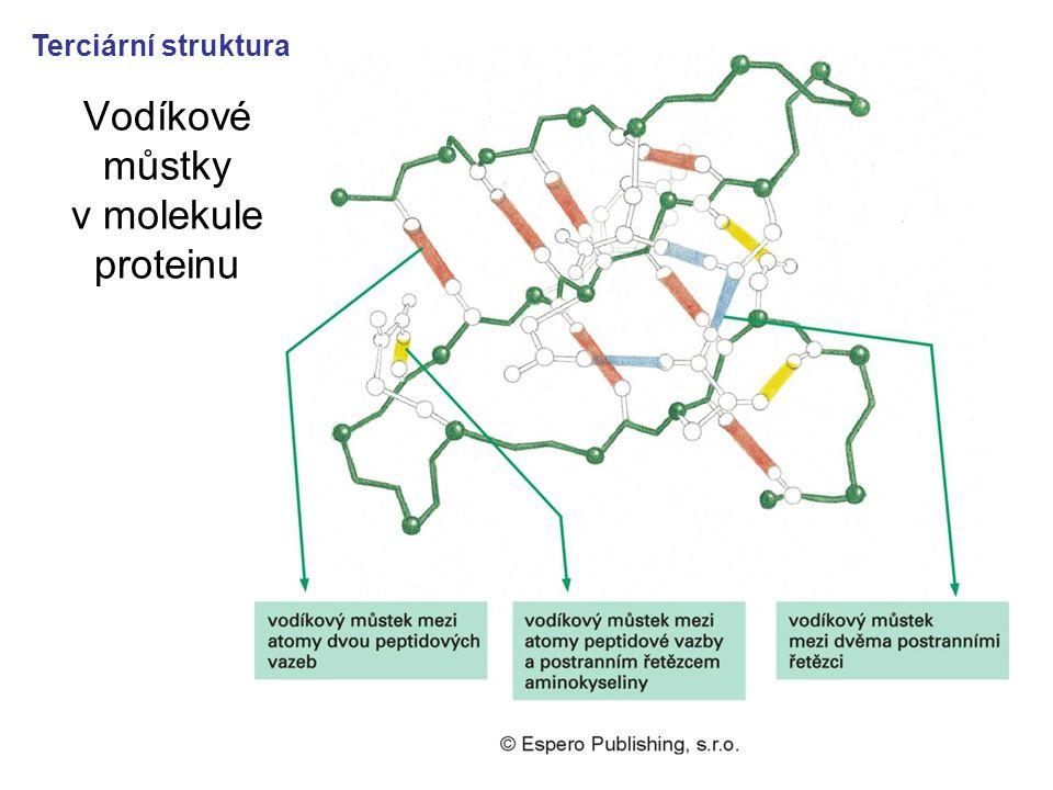 Vodíkové můstky v molekule proteinu