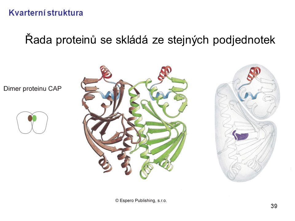 Řada proteinů se skládá ze stejných podjednotek