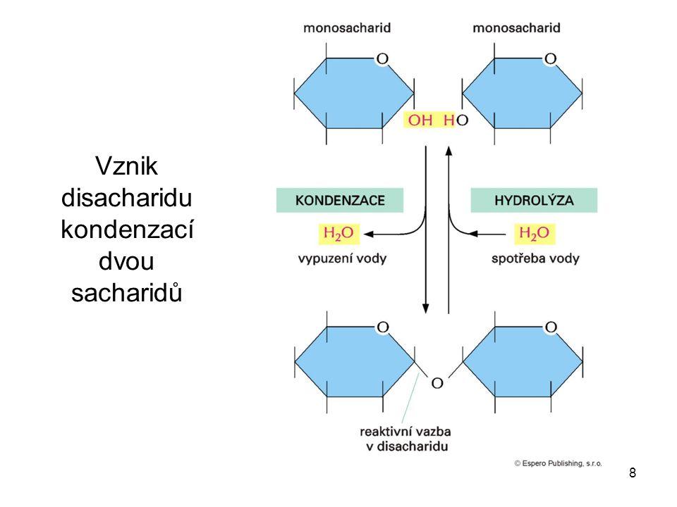 Vznik disacharidu kondenzací dvou sacharidů