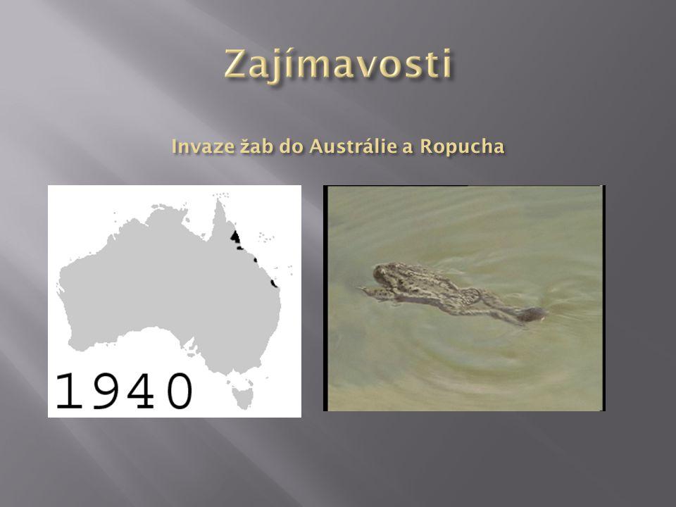 Invaze žab do Austrálie a Ropucha