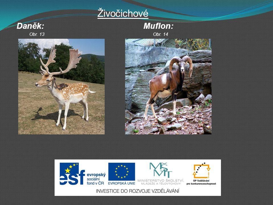 Živočichové Daněk: Muflon: Obr. 13 Obr. 14