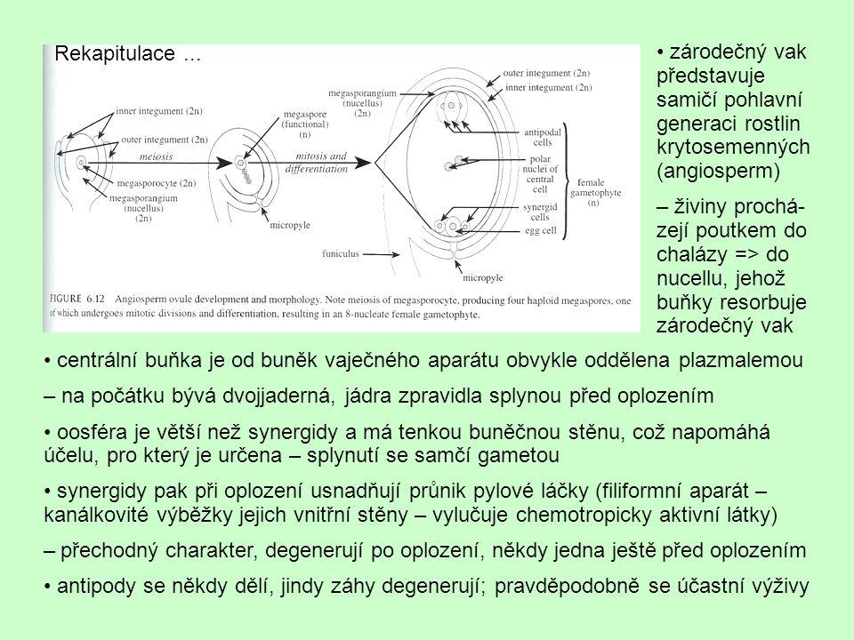 Rekapitulace ... • zárodečný vak představuje samičí pohlavní generaci rostlin krytosemenných (angiosperm)