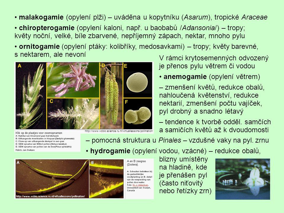 • malakogamie (opylení plži) – uváděna u kopytníku (Asarum), tropické Araceae