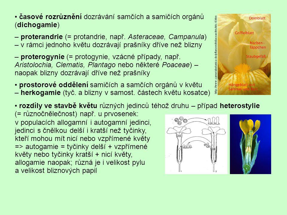 • časové rozrůznění dozrávání samčích a samičích orgánů (dichogamie)