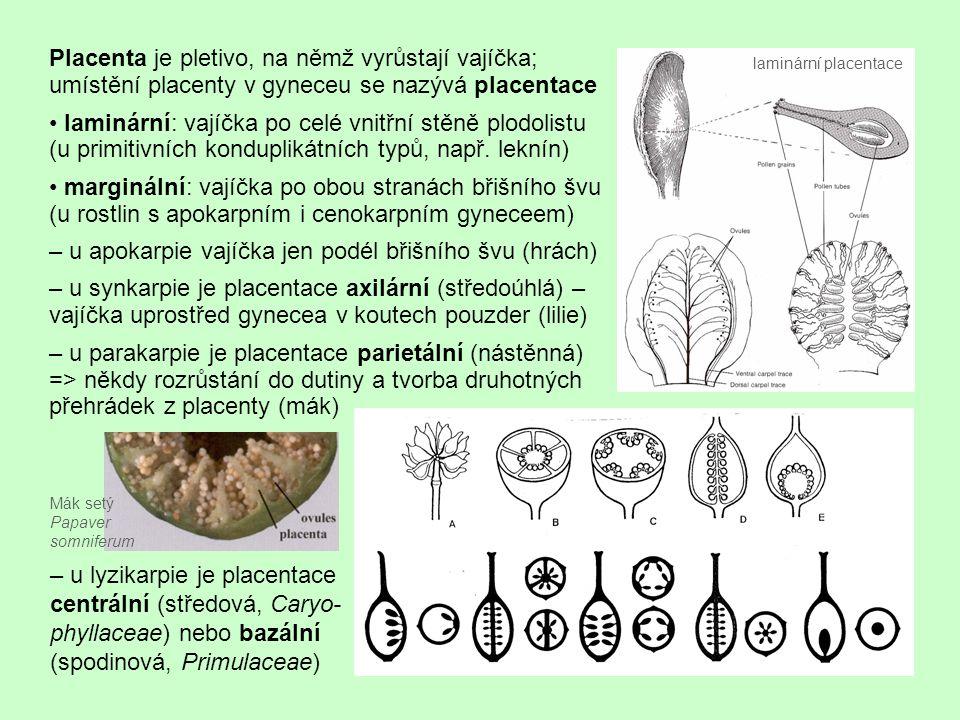 – u apokarpie vajíčka jen podél břišního švu (hrách)