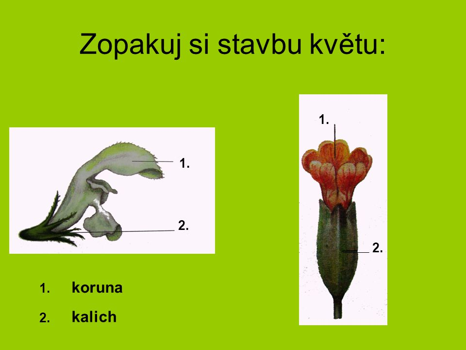 Zopakuj si stavbu květu:
