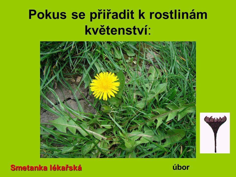 Pokus se přiřadit k rostlinám květenství: