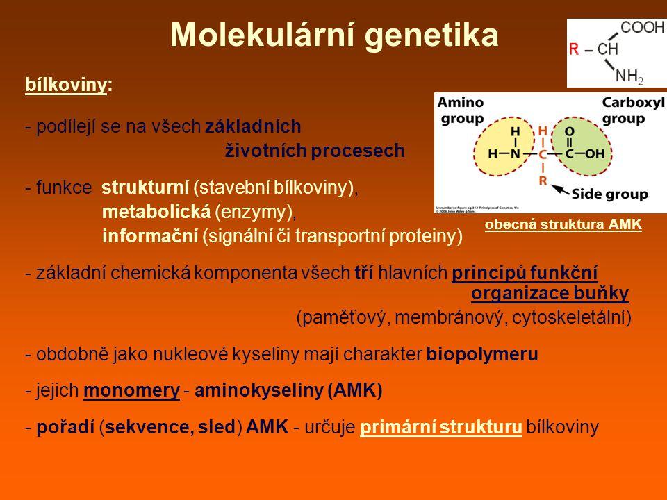 Molekulární genetika bílkoviny: - podílejí se na všech základních
