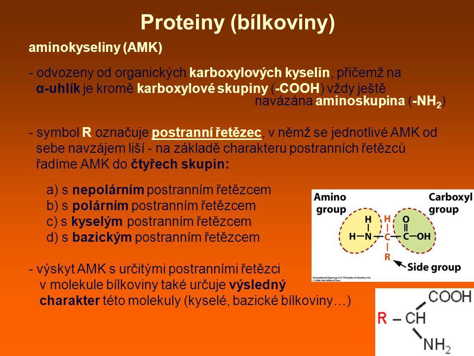 Proteiny (bílkoviny) aminokyseliny (AMK)