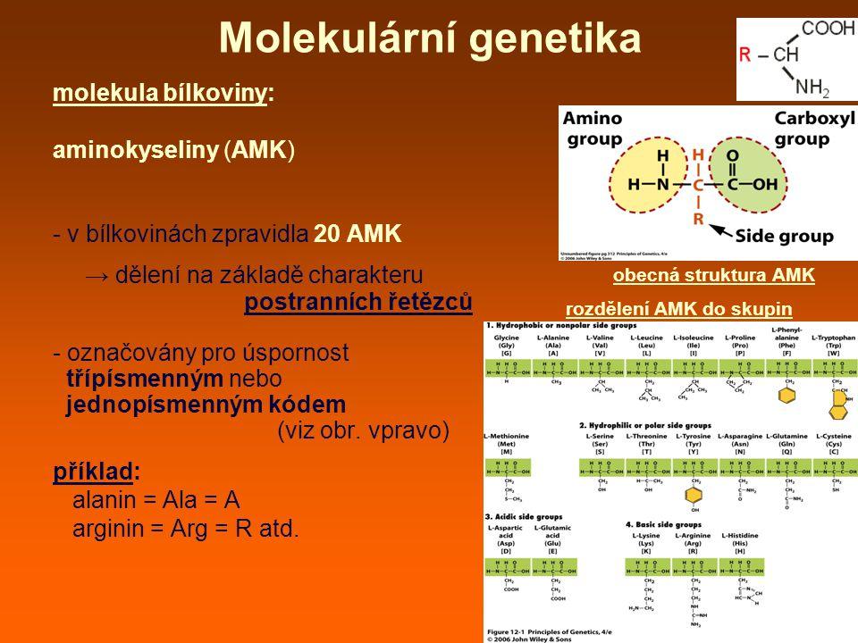 Molekulární genetika molekula bílkoviny: aminokyseliny (AMK)