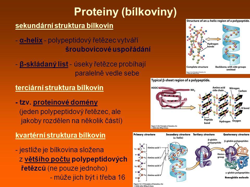 Proteiny (bílkoviny) sekundární struktura bílkovin