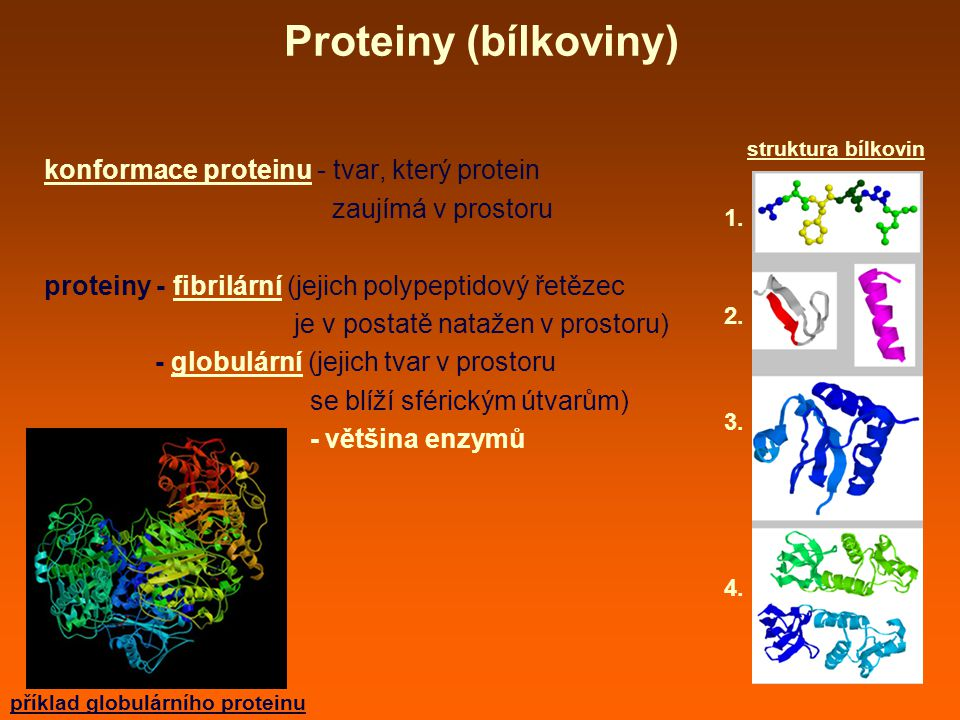 Proteiny (bílkoviny) konformace proteinu - tvar, který protein