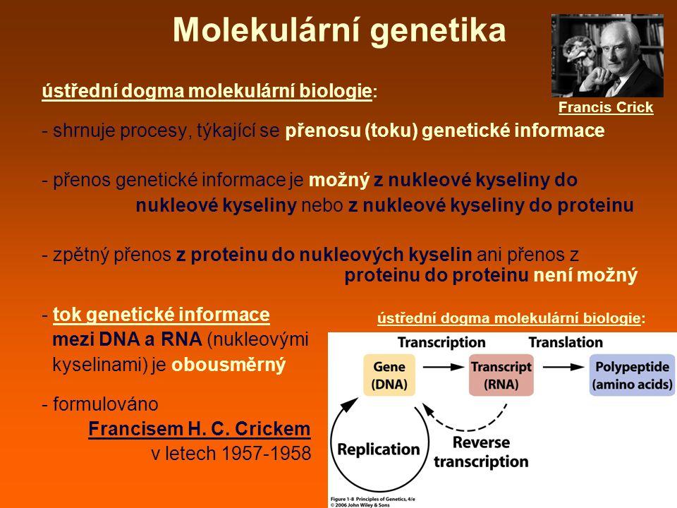 Molekulární genetika ústřední dogma molekulární biologie: