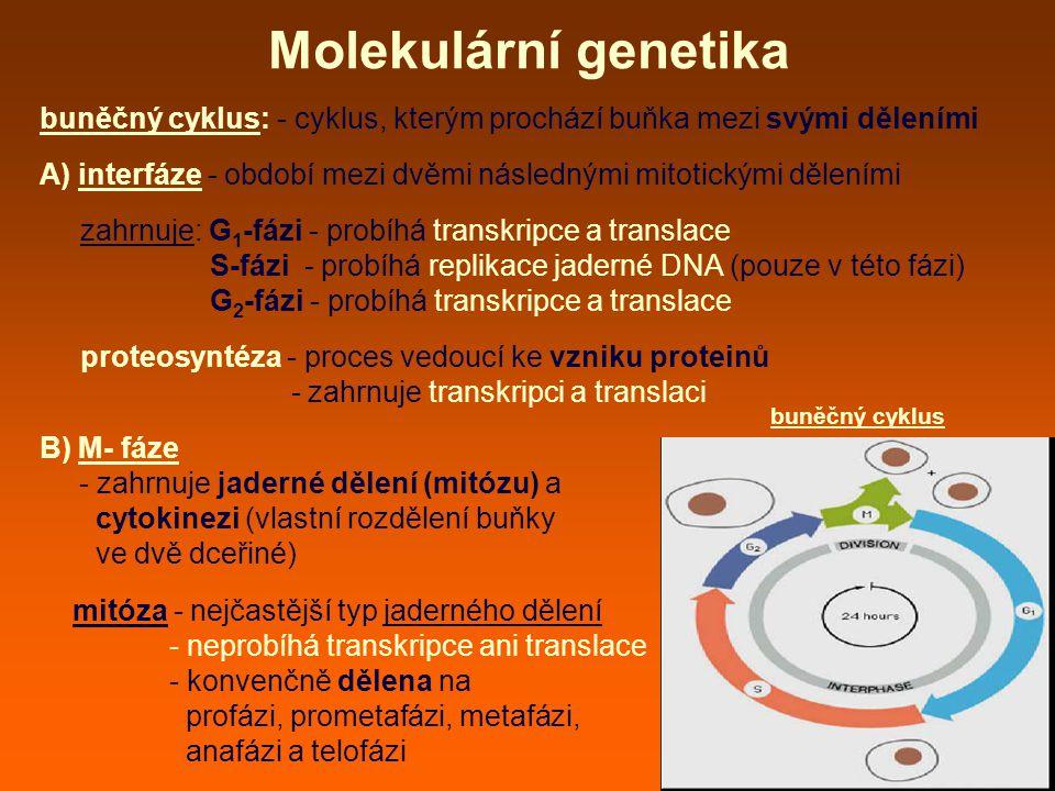 Molekulární genetika buněčný cyklus: - cyklus, kterým prochází buňka mezi svými děleními.