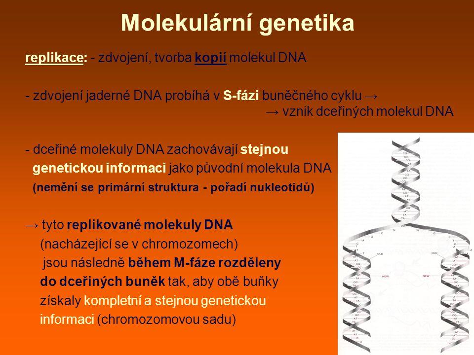 Molekulární genetika replikace: - zdvojení, tvorba kopií molekul DNA