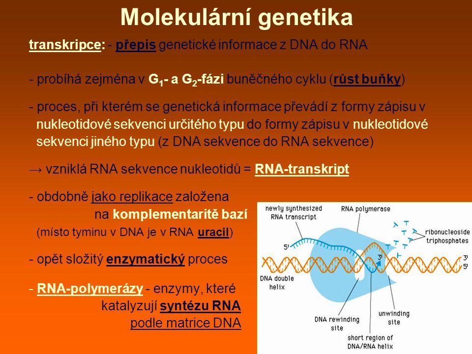 Molekulární genetika transkripce: - přepis genetické informace z DNA do RNA. - probíhá zejména v G1- a G2-fázi buněčného cyklu (růst buňky)