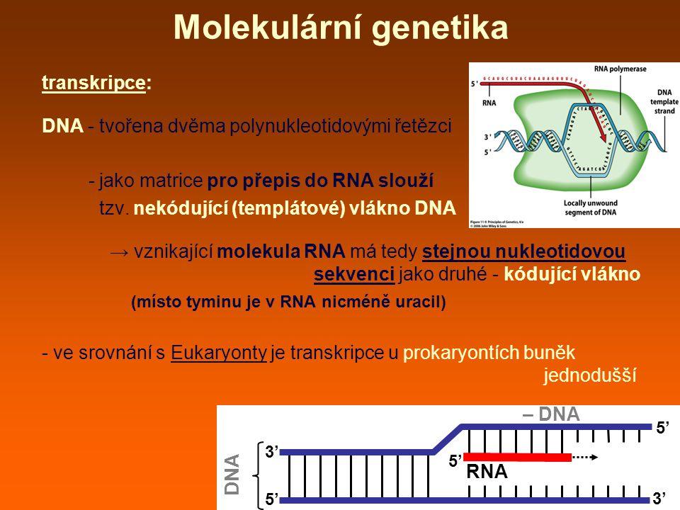 Molekulární genetika transkripce: