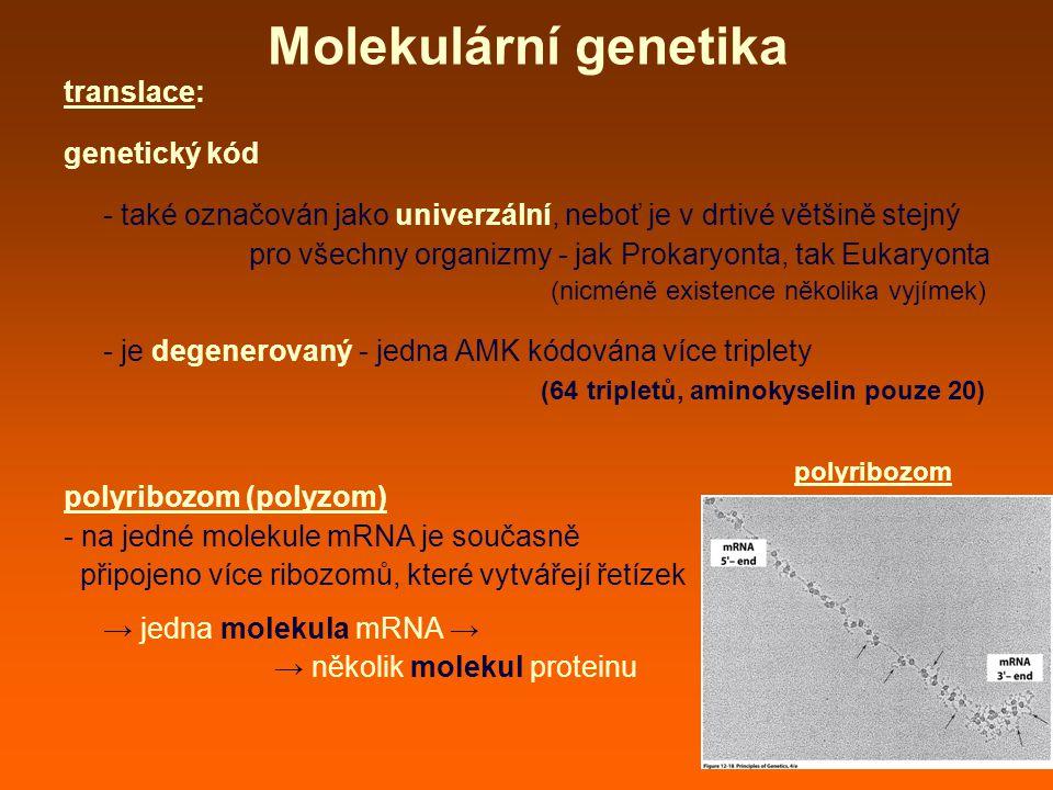 Molekulární genetika translace: genetický kód