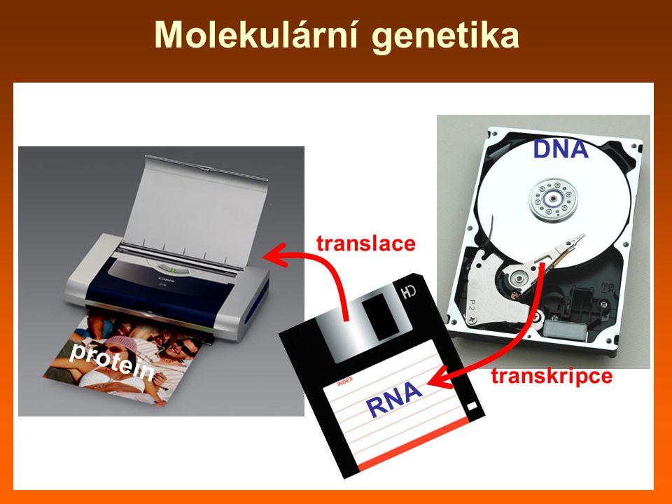 Molekulární genetika DNA translace protein transkripce RNA