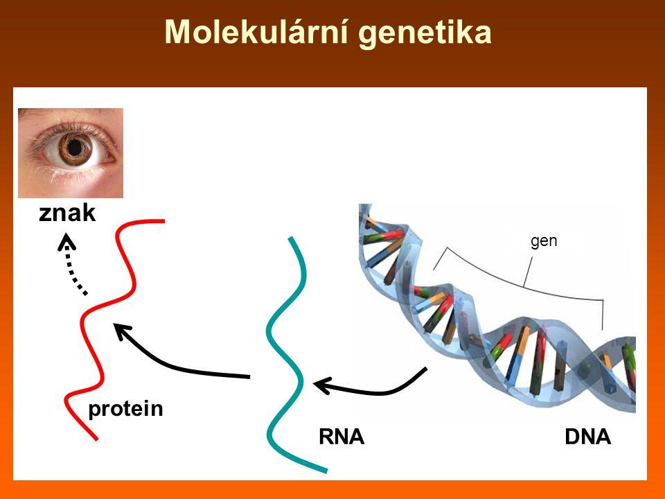 Molekulární genetika gen DNA RNA protein znak