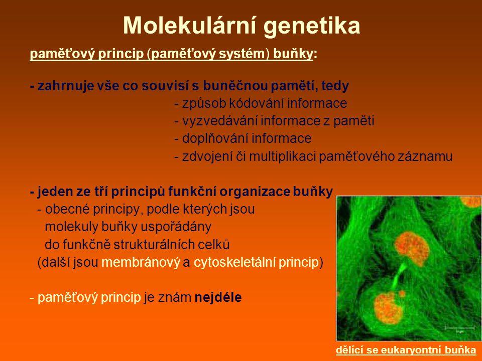 Molekulární genetika paměťový princip (paměťový systém) buňky: