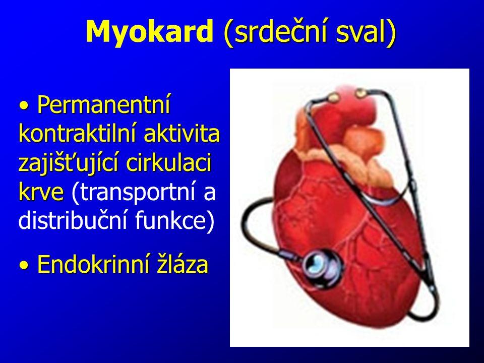 Myokard (srdeční sval)