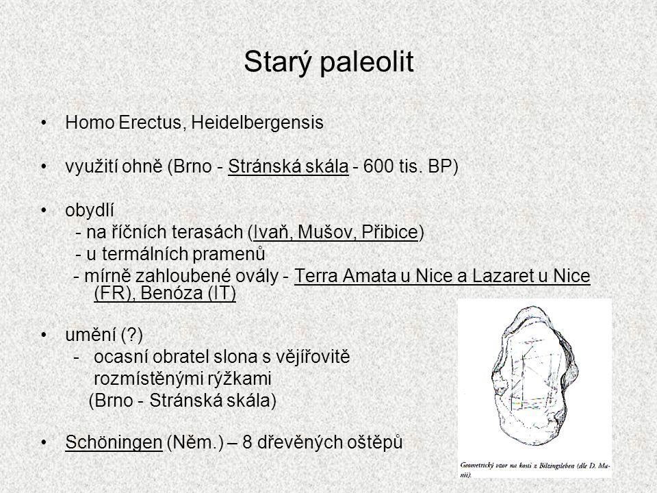 Starý paleolit Homo Erectus, Heidelbergensis