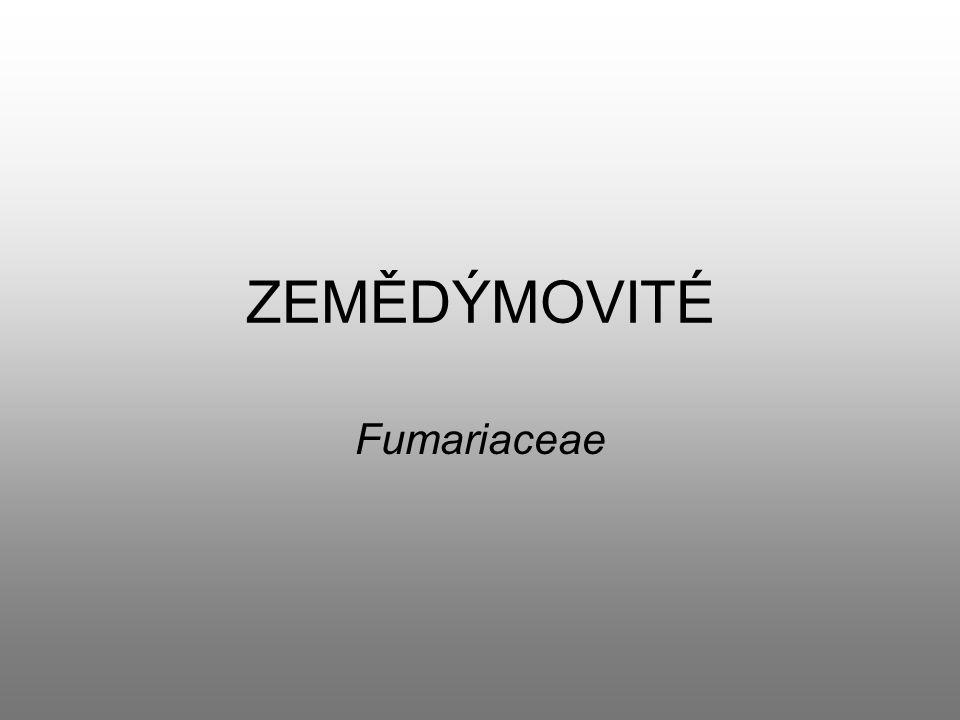 ZEMĚDÝMOVITÉ Fumariaceae