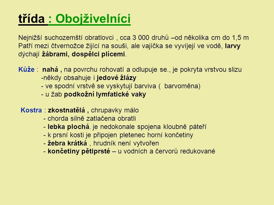 třída : Obojživelníci Nejnižší suchozemští obratlovci , cca 3 000 druhů –od několika cm do 1,5 m.