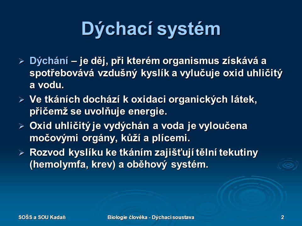 Biologie člověka - Dýchací soustava