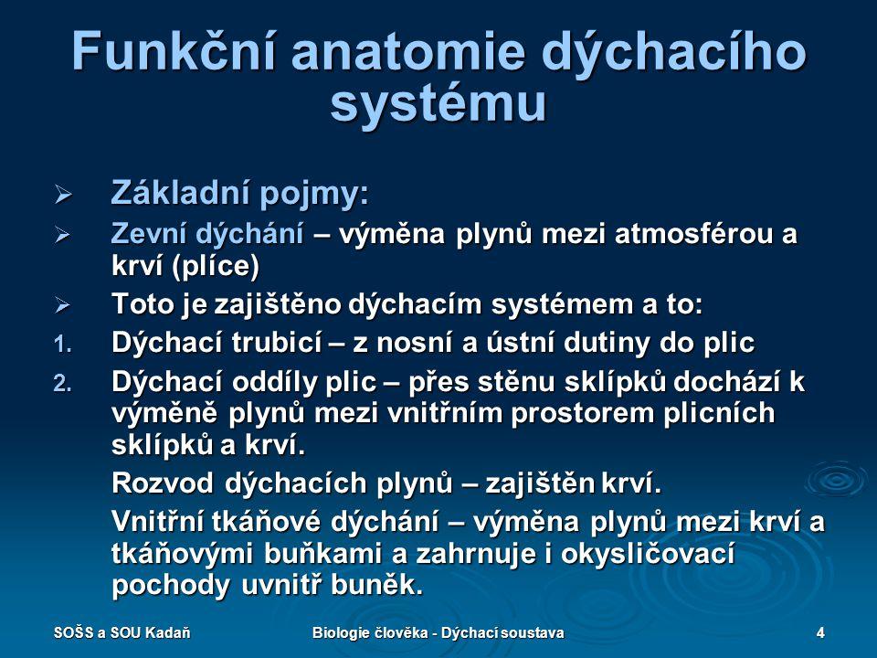 Funkční anatomie dýchacího systému