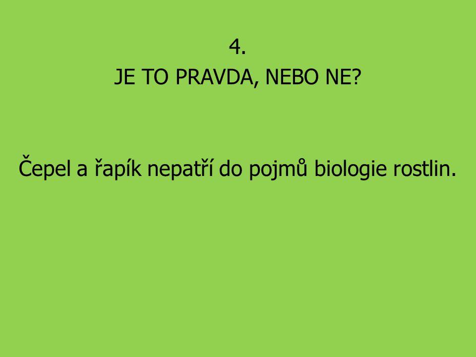Čepel a řapík nepatří do pojmů biologie rostlin.