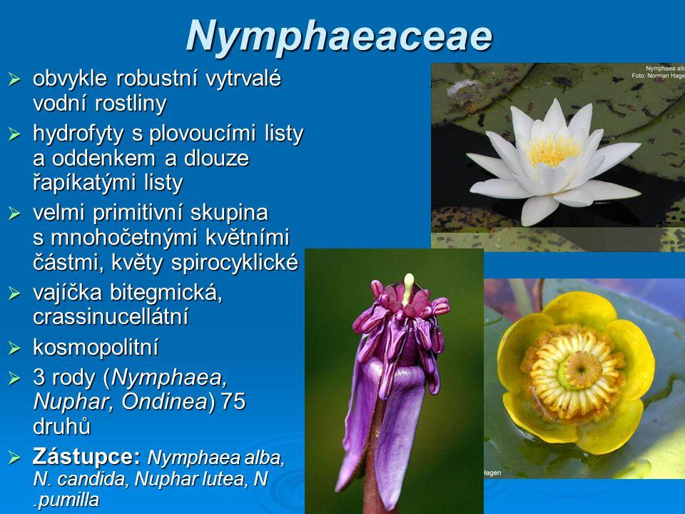 Nymphaeaceae obvykle robustní vytrvalé vodní rostliny