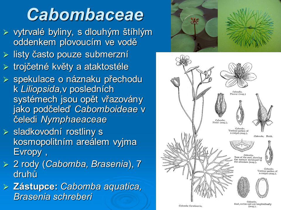 Cabombaceae vytrvalé byliny, s dlouhým štíhlým oddenkem plovoucím ve vodě. listy často pouze submerzní.