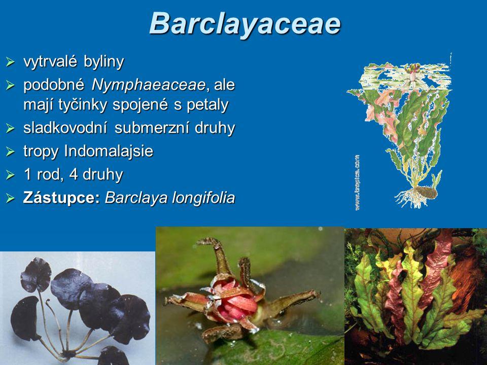 Barclayaceae vytrvalé byliny