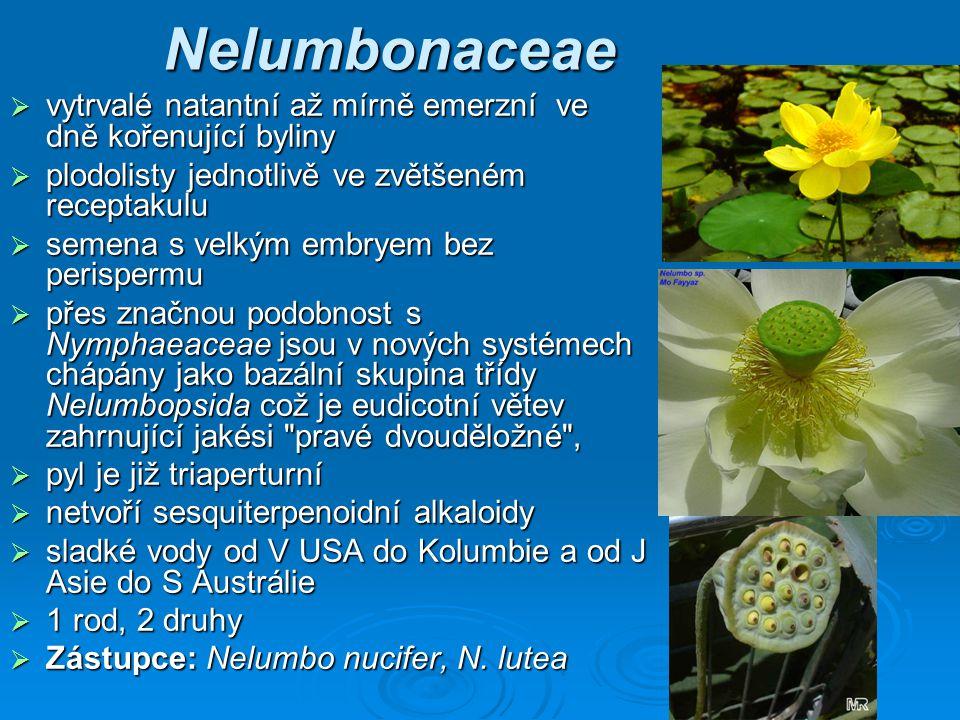 Nelumbonaceae vytrvalé natantní až mírně emerzní ve dně kořenující byliny. plodolisty jednotlivě ve zvětšeném receptakulu.