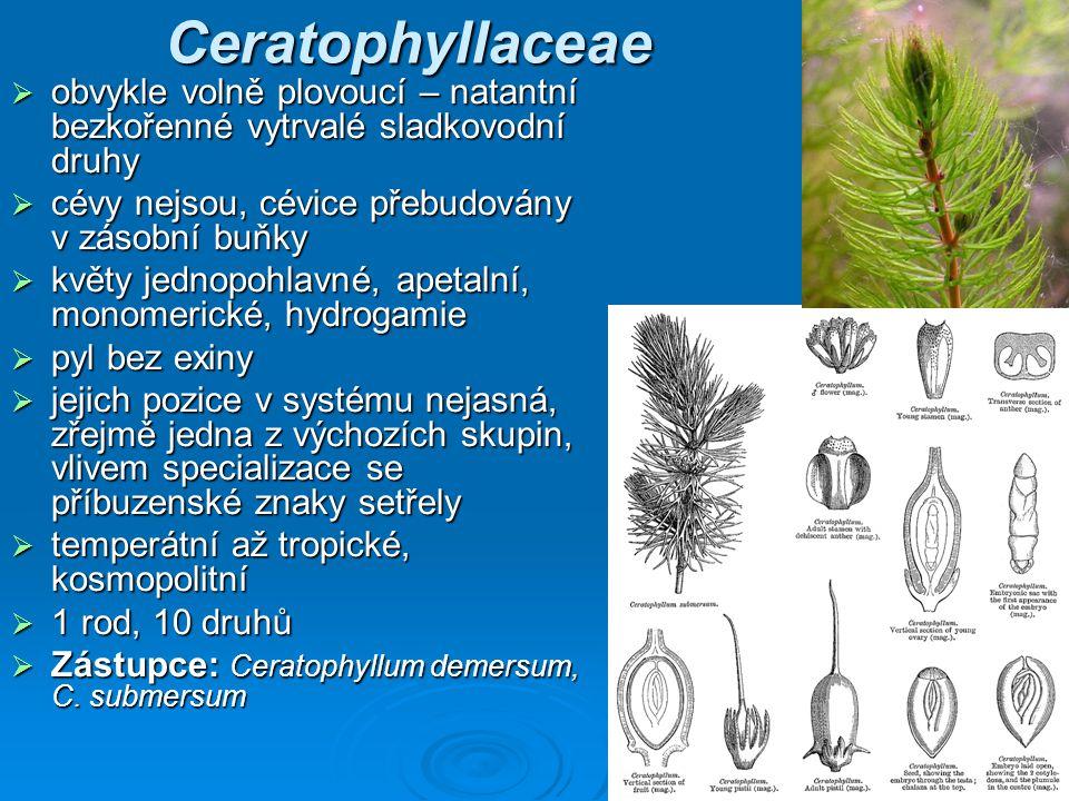 Ceratophyllaceae obvykle volně plovoucí – natantní bezkořenné vytrvalé sladkovodní druhy. cévy nejsou, cévice přebudovány v zásobní buňky.