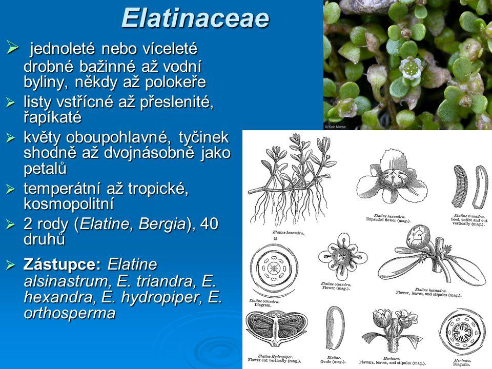 Elatinaceae jednoleté nebo víceleté drobné bažinné až vodní byliny, někdy až polokeře. listy vstřícné až přeslenité, řapíkaté.