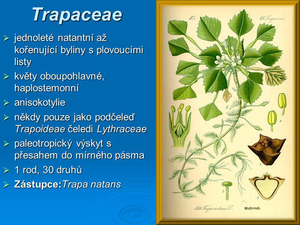 Trapaceae jednoleté natantní až kořenující byliny s plovoucími listy