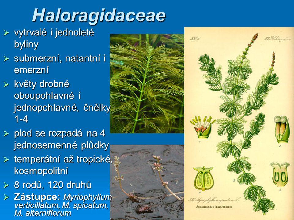 Haloragidaceae vytrvalé i jednoleté byliny
