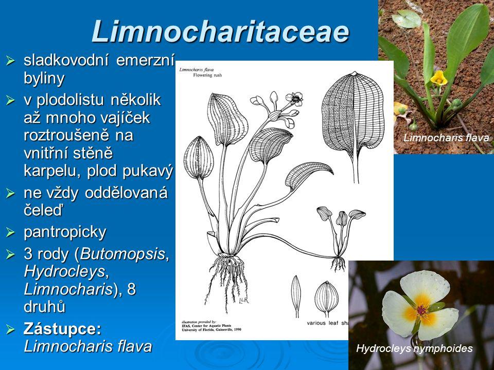 Limnocharitaceae sladkovodní emerzní byliny