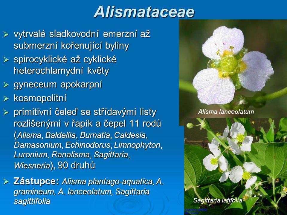 Alismataceae vytrvalé sladkovodní emerzní až submerzní kořenující byliny. spirocyklické až cyklické heterochlamydní květy.