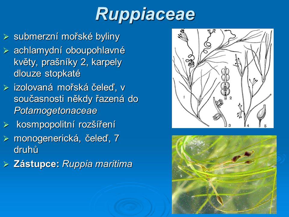 Ruppiaceae submerzní mořské byliny
