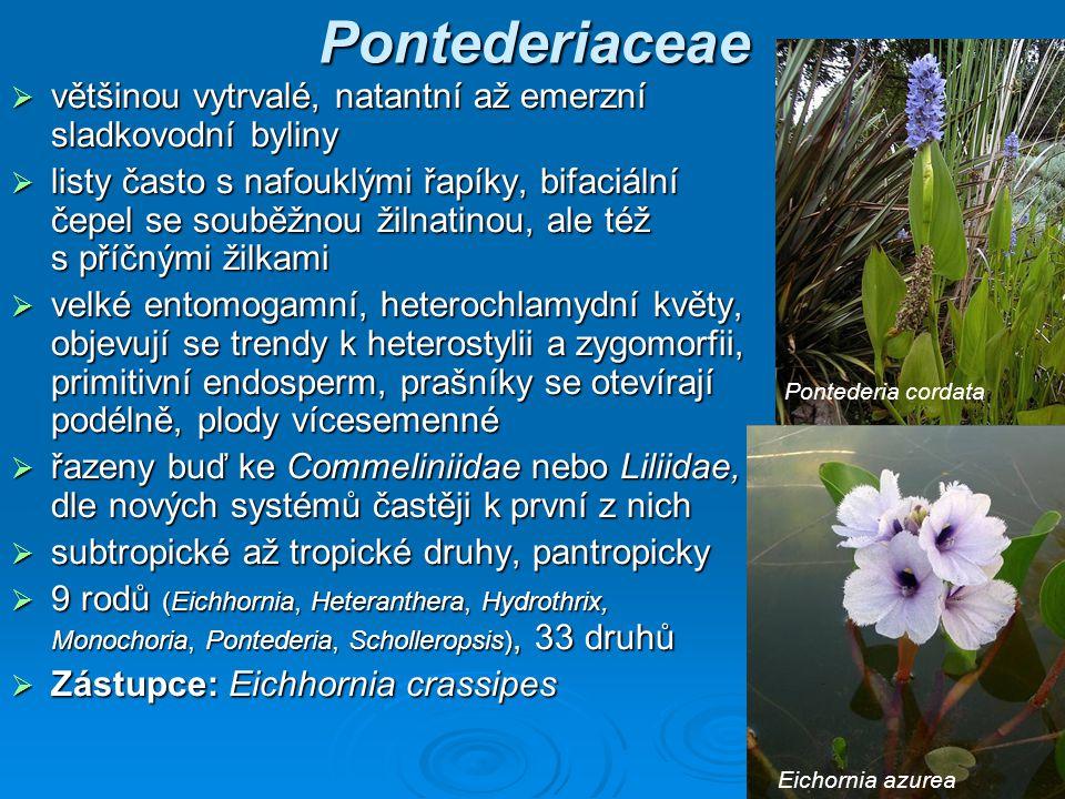 Pontederiaceae většinou vytrvalé, natantní až emerzní sladkovodní byliny.