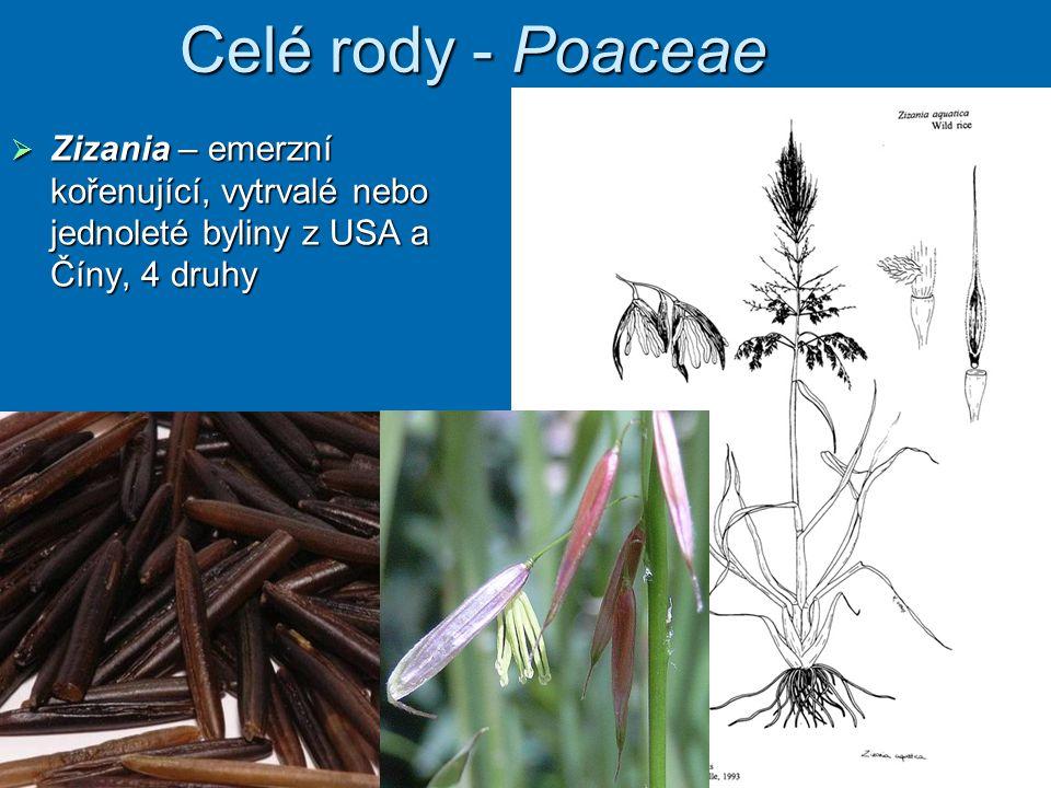 Celé rody - Poaceae Zizania – emerzní kořenující, vytrvalé nebo jednoleté byliny z USA a Číny, 4 druhy.